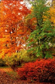 trees in Autumn / Fall colour