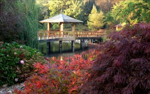 gazebo in Japanese garden