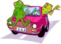 two frogs in a car