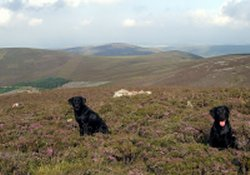 two black dogs in the hills