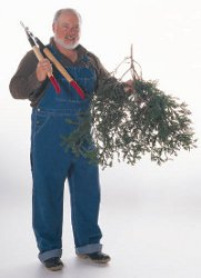 man with pruning shears and tree branch