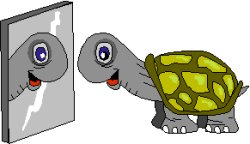 tortoise looking in a mirror