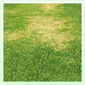 bare patches on lawn