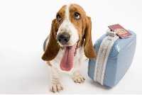 dog and suitcase
